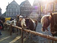 327. Pferdemarkt in Leonberg